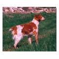 SE UCH Rusticolus Fanta S39864/91 Ägare: Marie Nylander