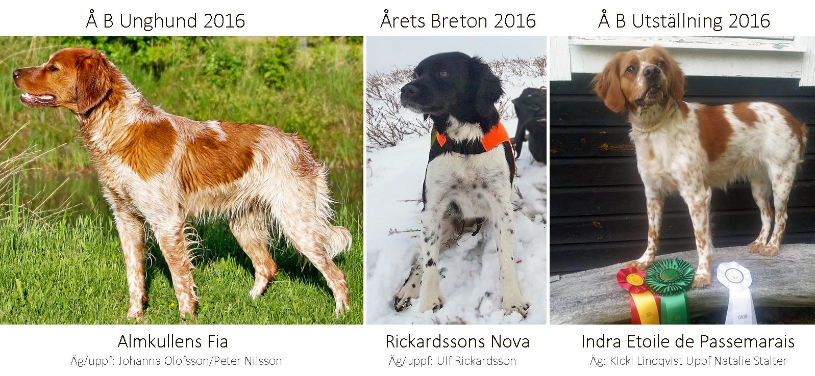 Årets Breton 2016