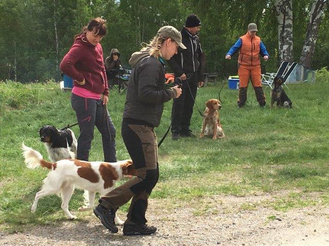 Bretonträff Och Jaktdressyrkurs Boden 3-4 Juni