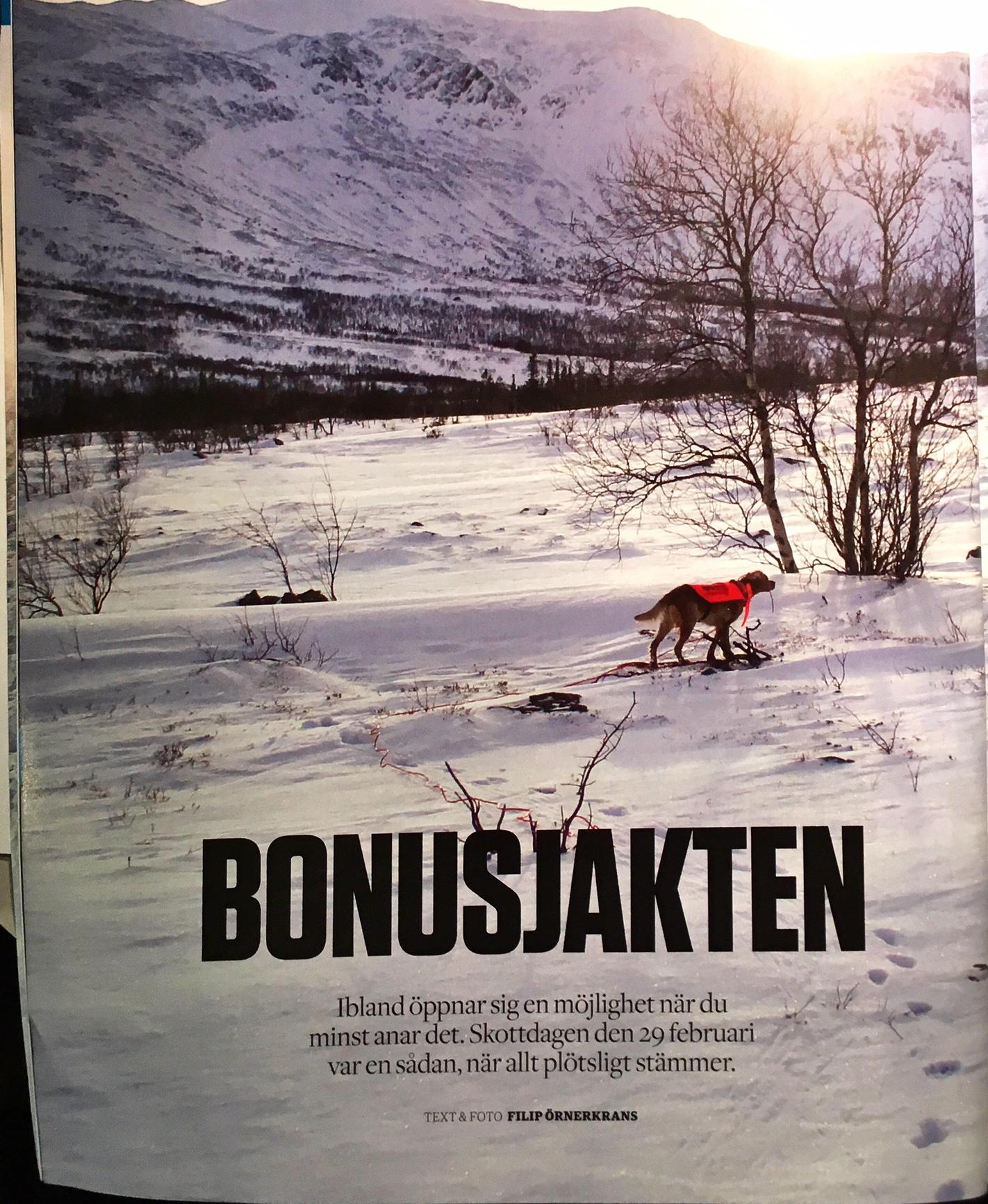 Bretonen Akka I Svensk Jakt