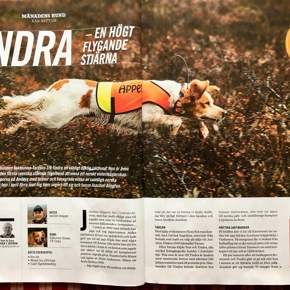 Vakkuniva Tarzan's T/R Tindra – Månadens Hund I Jaktjournalen