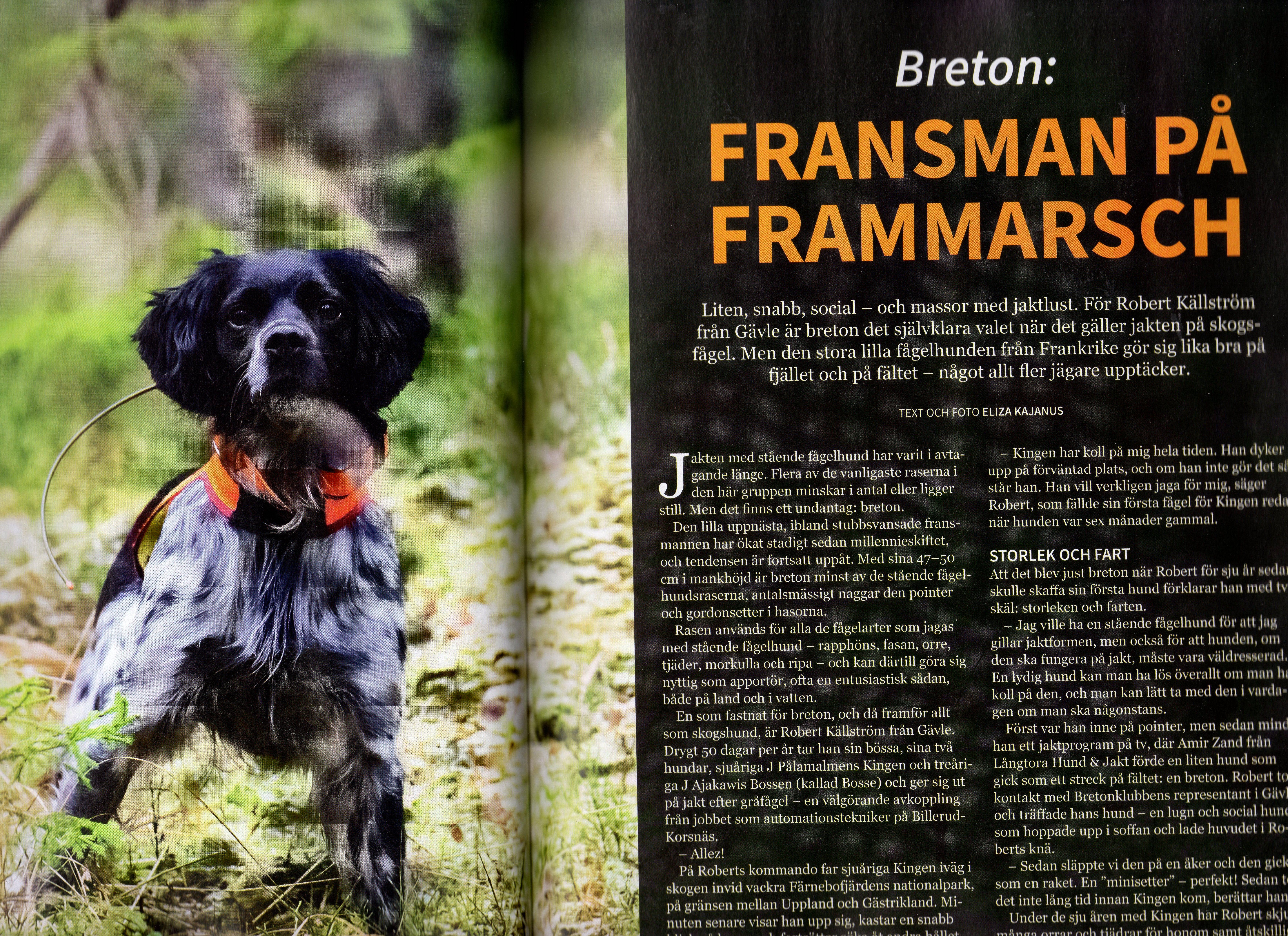 Reportage I Tidningen Jakt Och Jägare Om Breton