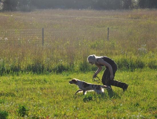 Fågelhundsträning På Långtora 14 Aug
