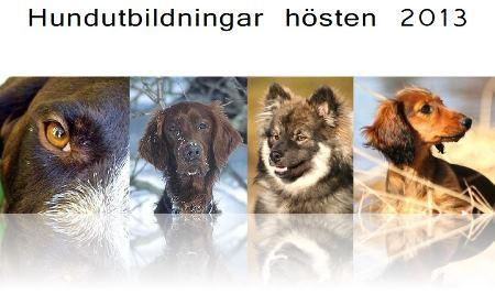 Hundutbildningar 2013