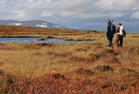 Hundförare Sökes Till Jakt I Södra Lappland