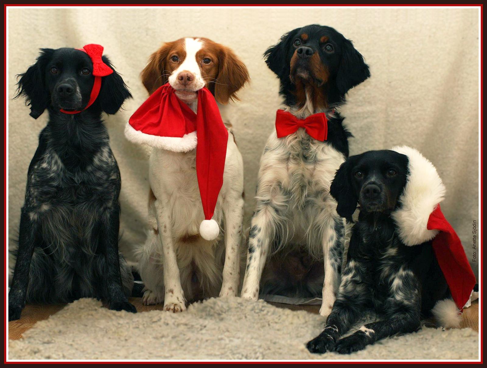 God Jul Alla BRETON-vänner!