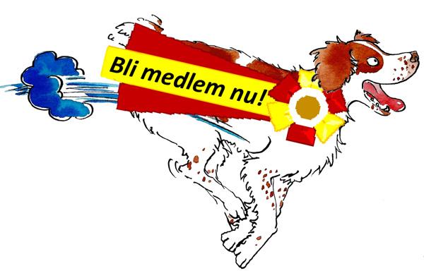 Bli Medlem I Svensk Bretonklubb!