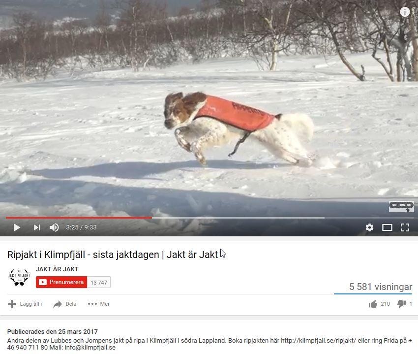 Film Om Vinterjakt På Klimpfjäll Med Breton
