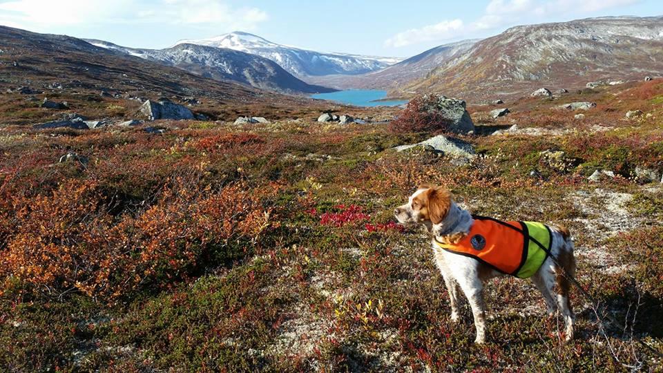 Parning Har Skett I Brufjordens Kennel , Stavang Norge