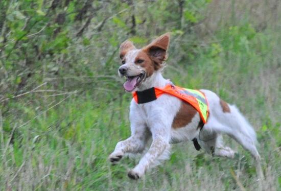 Hundträning På Långtora